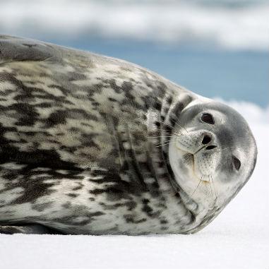 Antarctica van helden travel middel